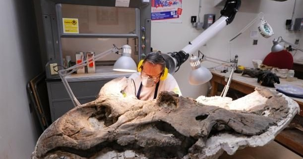 Clive Coy | Chief Technician, Laboratory for Vertebrate Paleontology